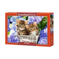 "Castorland (C-151561) - ""Cute Kittens"" - 1500 brikker puslespil"